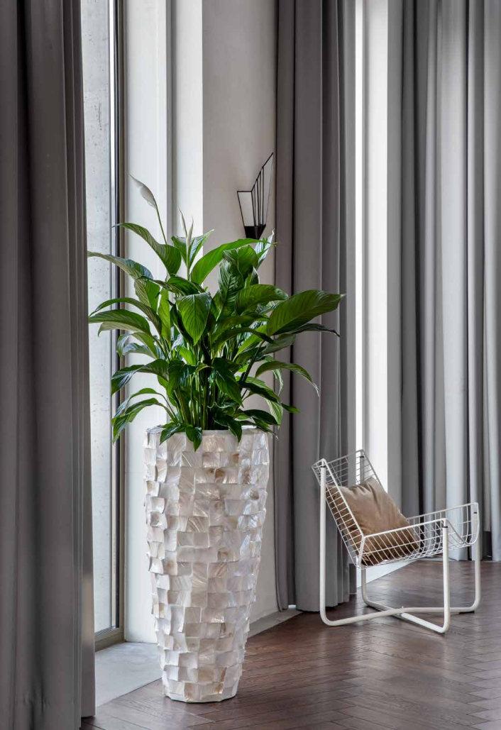piękna donica z rośliną